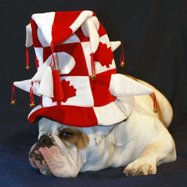 Canada Day Dog