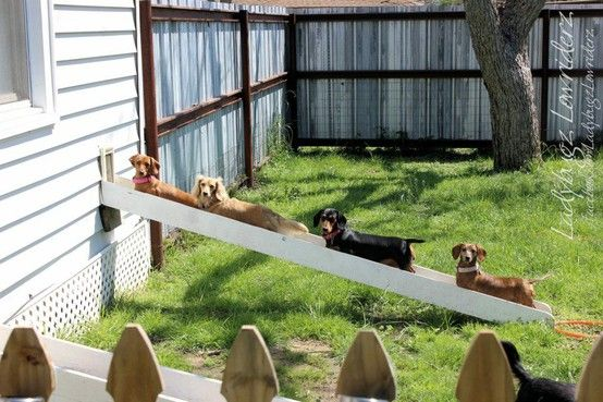 Doxie conveyor belt! Ramp protects their backs too.