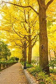 Ginkgo biloba - The Life Story of the Oldest Tree on Earth. In an interview with Yale Environment 360, botanist Peter Crane explains what makes the ginkgo unique.