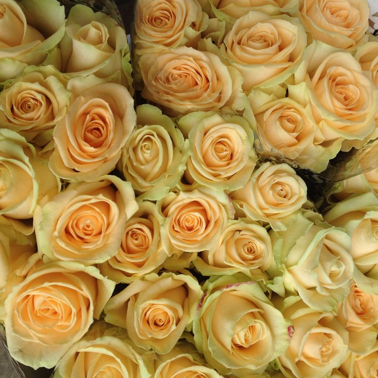 Wholesale Flowers For Weddings Events: Wholesale Fresh Flowers For DIY Weddings And Events
