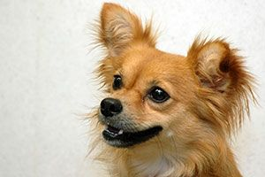 Finding the right daycare for your dog