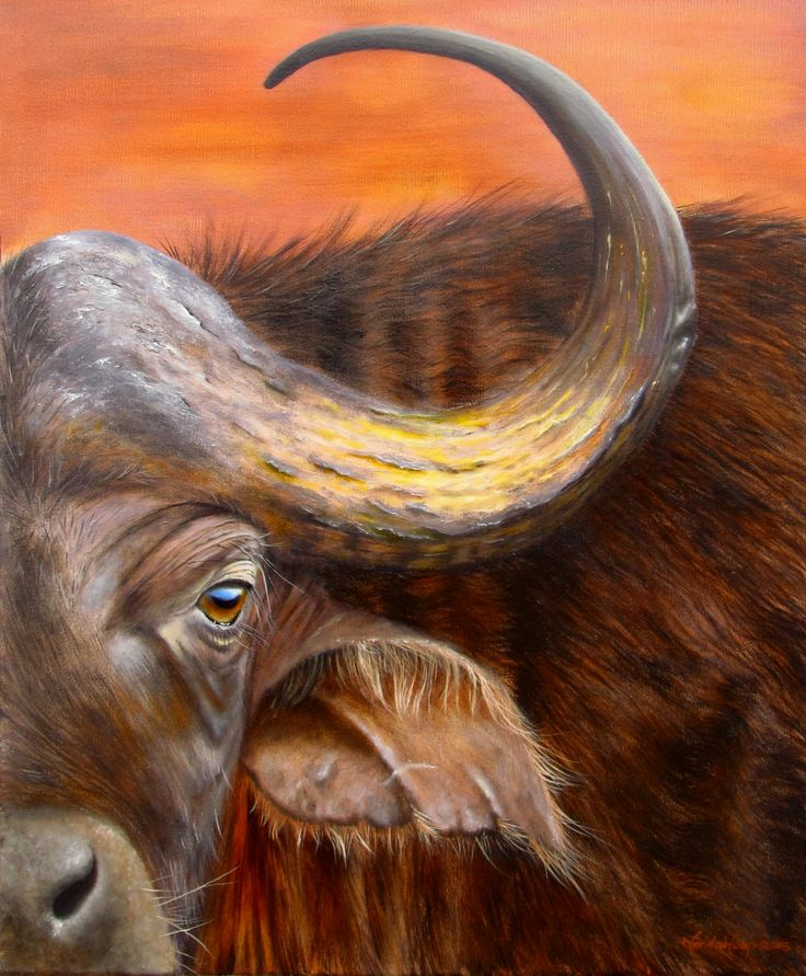 Kaapse buffel - Olie op canvas, 50x60