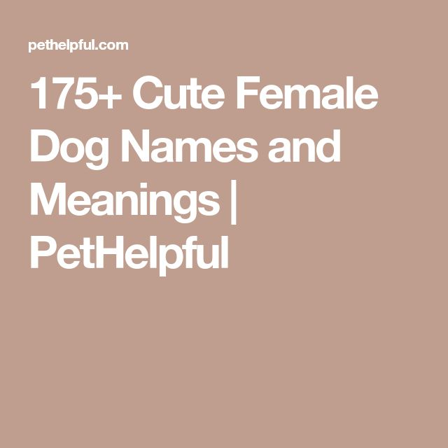 175+ Cute Female Dog Names and Meanings | PetHelpful