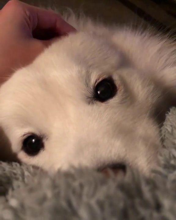 Spoiling a fluff – Cute animals