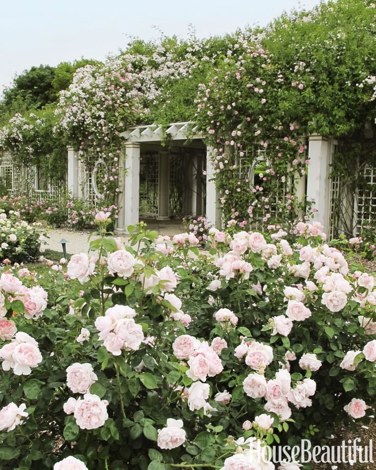Stick to a Theme - Stick to a Theme A strong message — whether it's one particular color or kind of plant — always reads well. For a client who really loves roses, we planted some 250 English grandifloras to create this profusion of blooms. Limiting yourself to one type of rose can also make the garden easier to care for.
