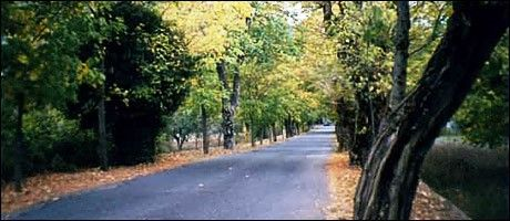 The road of #love in #Vytina #Arcadia #greece #discover_peloponnese #mainland #trees #forest  Discover it here http://www.discover-peloponnese.com/