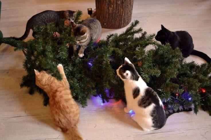 Pets and Christmas