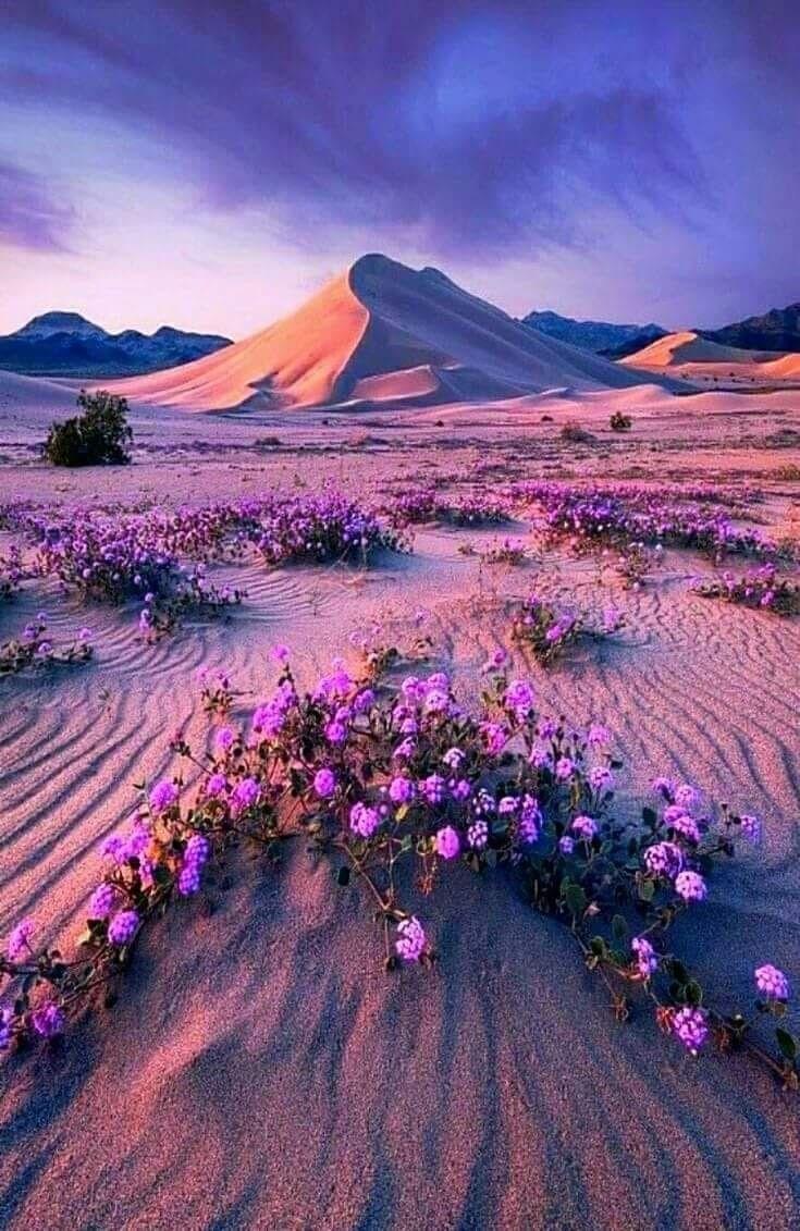 California Usa Beautiful Nature Beautiful Landscapes Landscape Photography