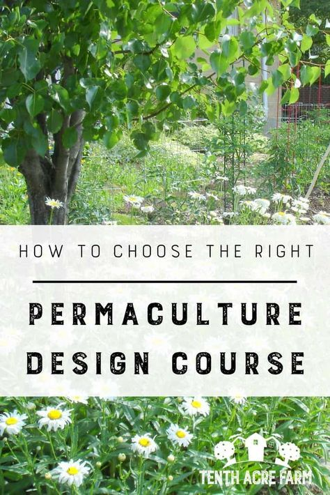 How to Choose the Right Permaculture Design Course: Looking for a permaculture design course? There are plenty to choose from—here's how to find the right permaculture course to meet your needs. #permaculture