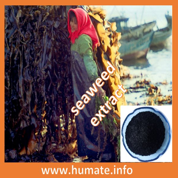 18%alginic acid from marine seaweed based fertilizer,seaweed extract fertilizer, View seaweed extract fertilizer, Honganyuan seaweed fertilizer Product Details from Pingxiang Red An Yuan Humic Acid Co., Ltd.---email: kathy@humate.info ,whatsapp :008614707090699