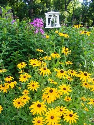 Black-eyed susan flower bed garden birdhouse