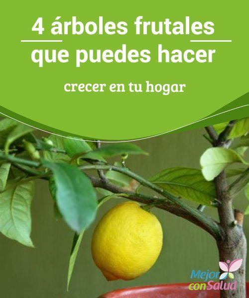 M s de 25 ideas fant sticas sobre rboles en macetas en for Cultivo de arboles frutales en macetas