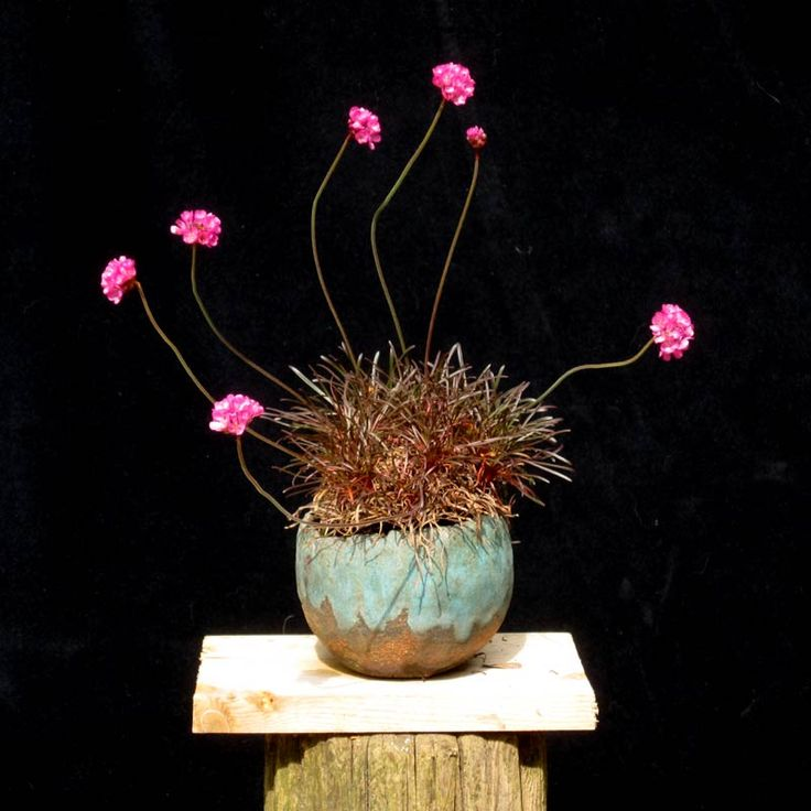 Gazon d'espagne: Accent Plantings, Kus 0010, Apical Meristems, Google For, Eter Und, Beauty, Inspiring Gardens