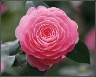 Much prettier than a rose!