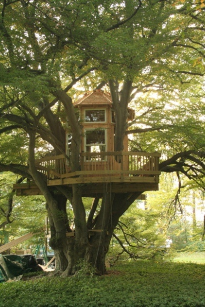 Best 25 Adult Tree House Ideas On Pinterest Backyard Treehouse Tree House Deck And Tree Forts