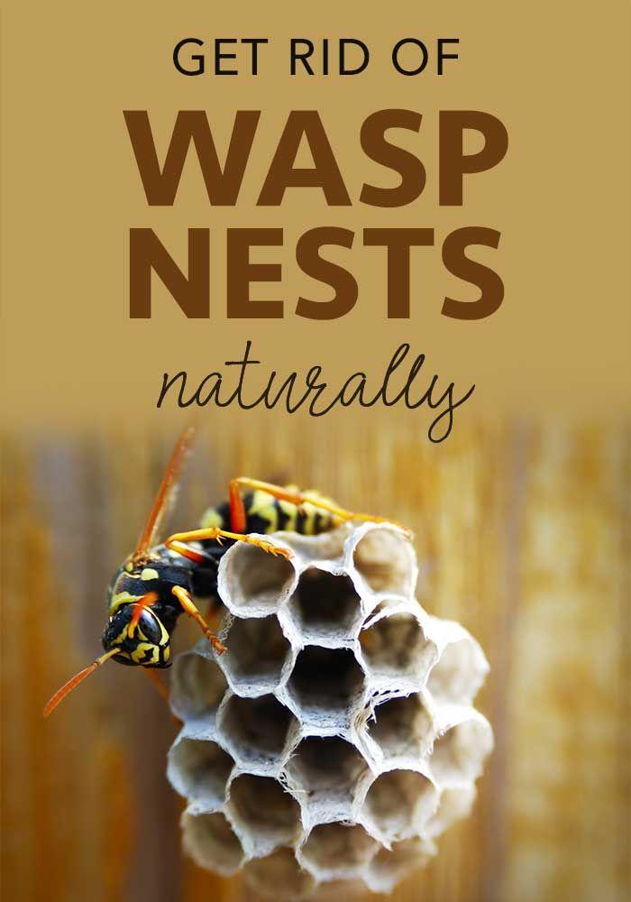 1da886e1e3634c2af2421d6289636b6f - How To Get Rid Of Wasps In A Stone Wall