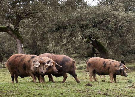 Nueva norma de calidad del jamón ibérico | ecoGourmet Shop