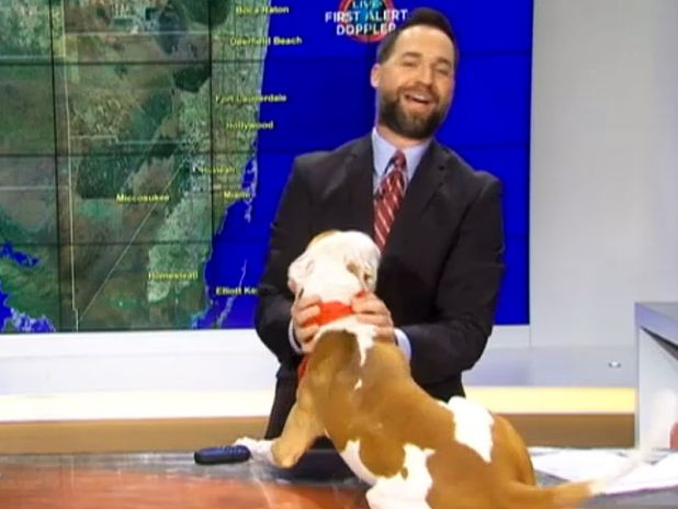 Pit Bull interrupts weather forecast to report 100% chance of kisses