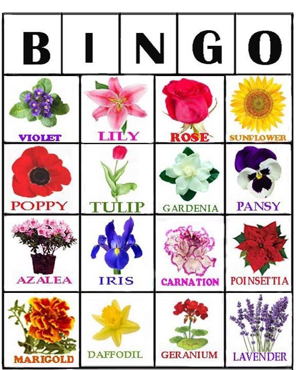card #1....Flower Bingo is a great activity for residents who love gardening. I put together 12 different Flower Bingo cards in  photoshop . There are 16 different Flower calling cards you can use to call bingo. These bingo cards will print out 8 x 10, on regular typing paper, but, should be placed inside a clear plastic sleeve or sheet protector to store. Picture Bingo with different themes  gives the residents a nice break from their regular bingo.