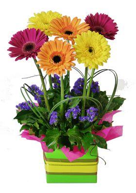 Google Image Result for http://www.flowerbasket.com.au/news/wp-content/uploads/2010/10/img.jpg