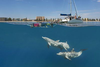 Far away from Australian Outback come to the coast, swim with dolphins and discover the diversity of #South Australia