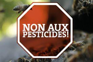 Photo: Dites non à un nouveau pesticide qui tue les abeilles!