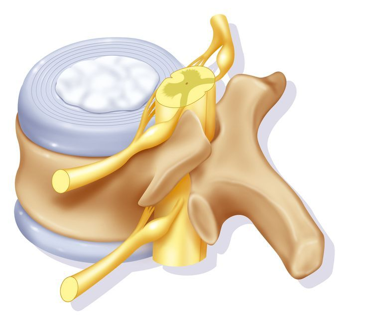 How to Keep Your Intervertebral Discs Healthy: The Structure of the Intervertebral Disc