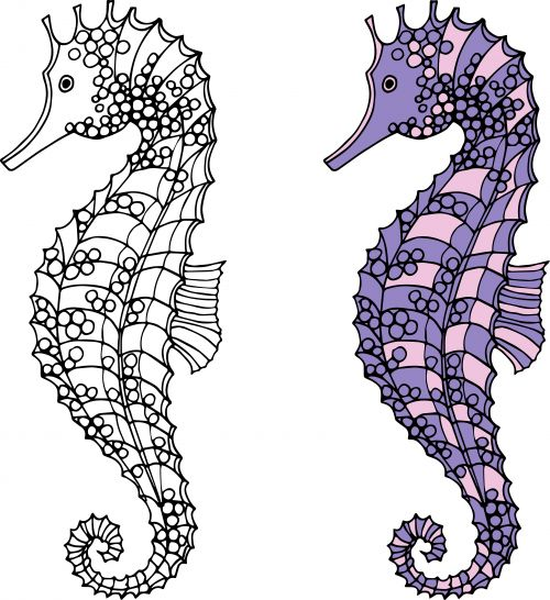 Seahorses Coloring Page Advanced Fantasy Coloring Pages