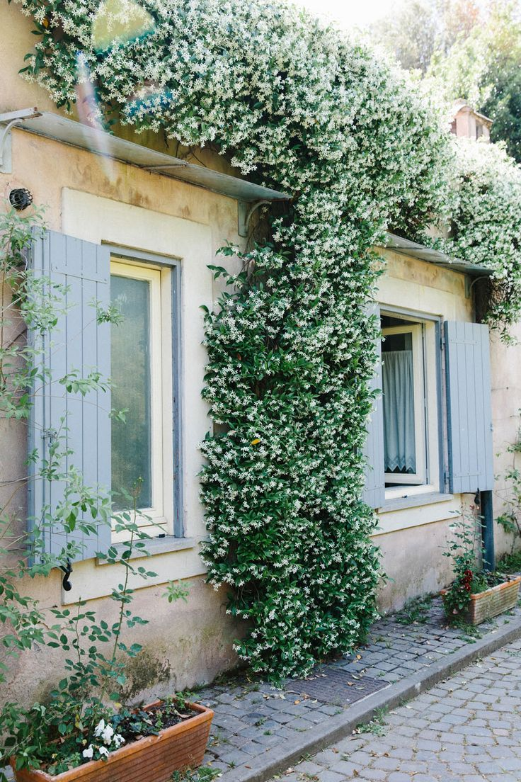 best photography images on Pinterest Flowers House and Accent