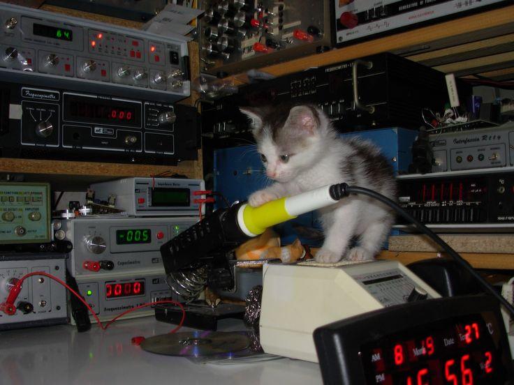 Piccolo Zeus in giro, ad inspezionare il tavolo di laboratorio