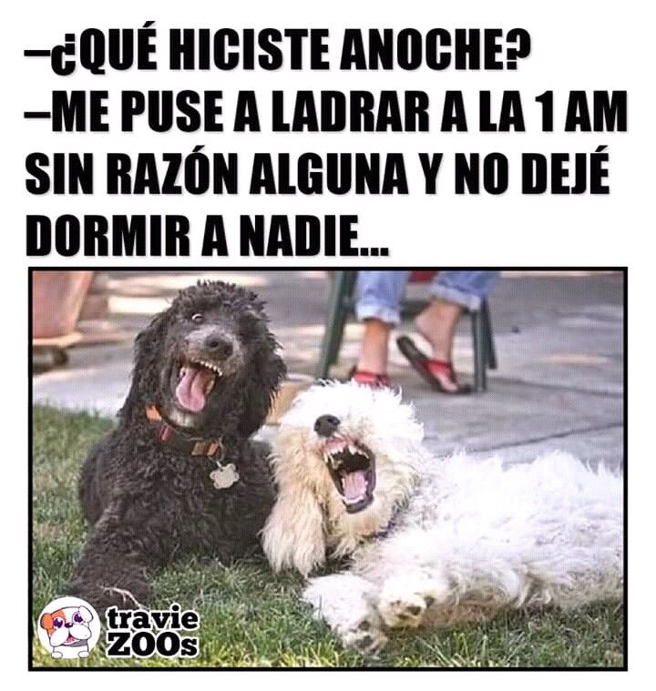 Pin De Kookie En Mascotas Memes De Perros Chistosos Perros Frases Memes Perros