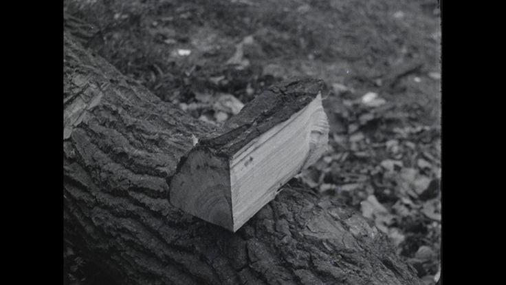 Video: KLOMPENINDUSTRIE | BG_26981.mpg (1920) - Ambachtelijke fabricage van klompen in de huisindustrie in de huisindustrie van O.-Overijssel. Vanaf het vellen van de boom tot de kant en klare klomp wordt het hele proces van de klompenfabricage getoond, grotendeels is dit nog handwerk. Kinderen lopend op klompen.