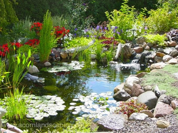 Pond Water Feature Maintenance Cleaning NY, NY Backyard Pond Cleaning ~  Maintenance, Pool Service NY By Acorn Landscaping Of Rochester New York