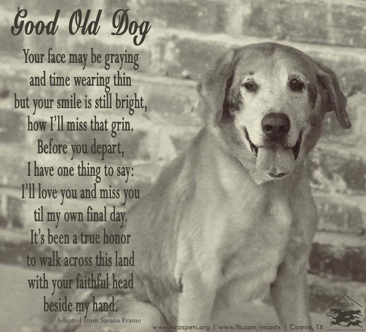 Dog Death Quotes: The 25+ Best Dog Poems Ideas On Pinterest