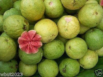 25 TROPICAL GUAVA PLANT SEED(Psidium Guajava) Fruit Tree Shrub-Perennial !