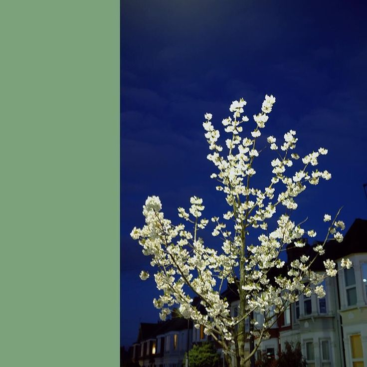 UFO blossom #spring #color #colour #streetphotography #london #gloaming #harringay #x-pro1 #xpro1 #fujifilm