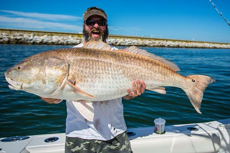 44 best images about fishing on pinterest jokes videos for Red drum fishing