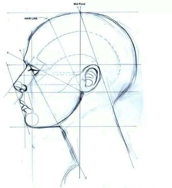 Drawing facial structure