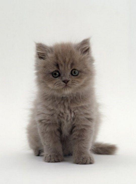 Pretty kitty, pretty eyes