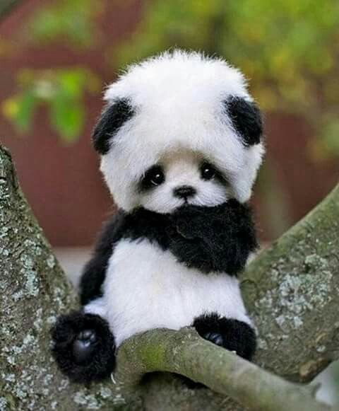I CAN'T I-I JUST CAN'T!!!! | Cuteness in 2018 | Pinterest | Cute animals, Baby animals and Cute baby animals