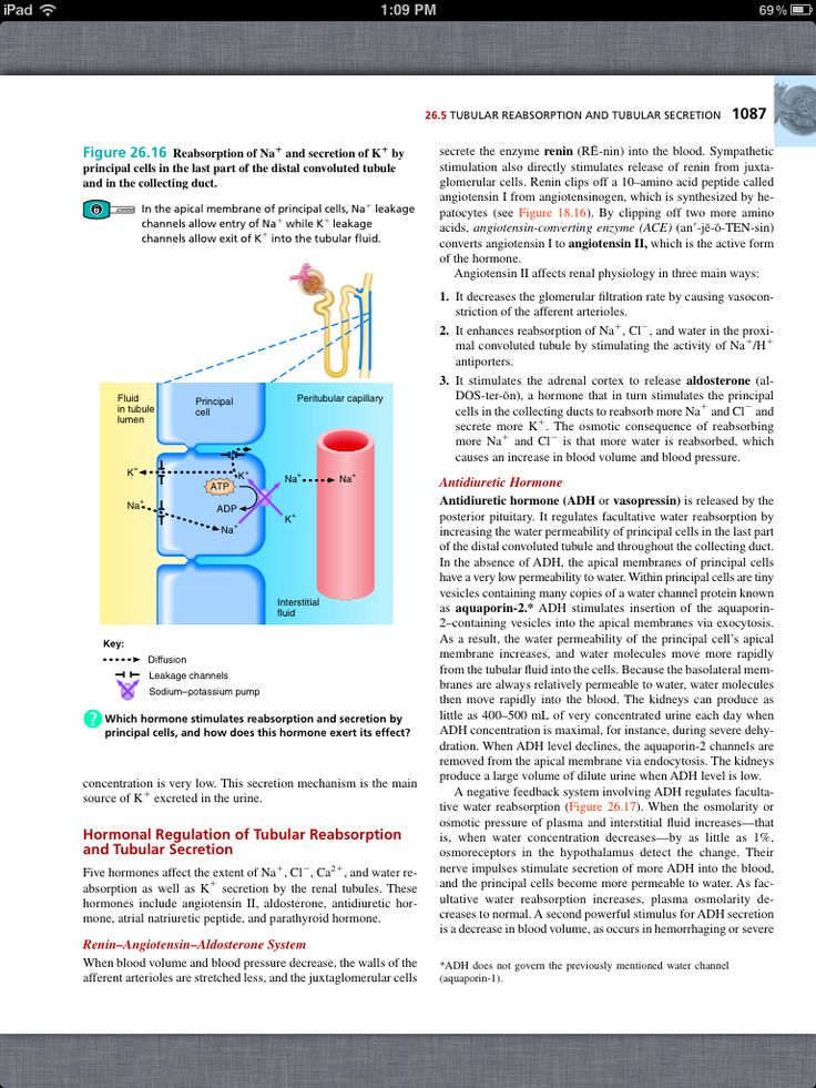 46 best Chapter 26, The Urinary System images on Pinterest | Book ...