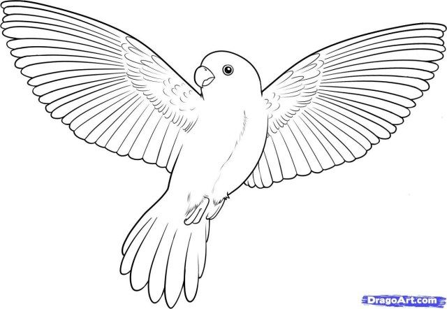 21 Exclusive Picture Of Bird Coloring Pages Entitlementtrap Com Flying Bird Drawing Bird Sketch Bird Drawings