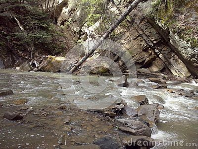 Water flowing and a fallen tree