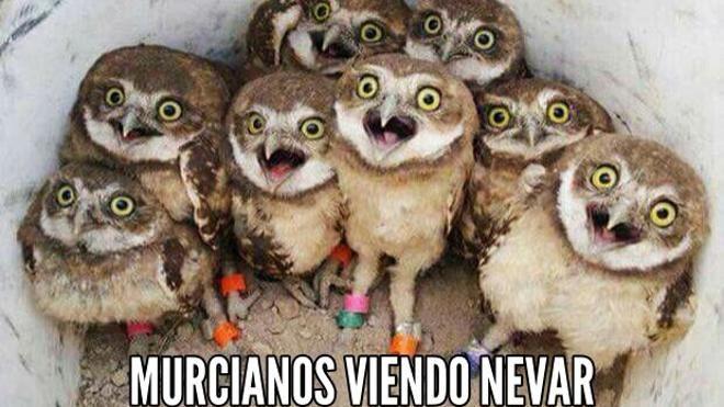Los mejores memes sobre la nieve en Murcia