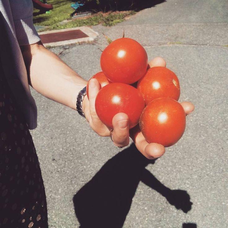 Spesa #km0 fatta . #chezhcdc #orto #bio #genuino #gustoso #instsfood #foodporn #vegetables #red #green #healtyfood #vitasana
