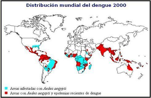 el dengue solo existe en zonas del mundo con climas tropicales