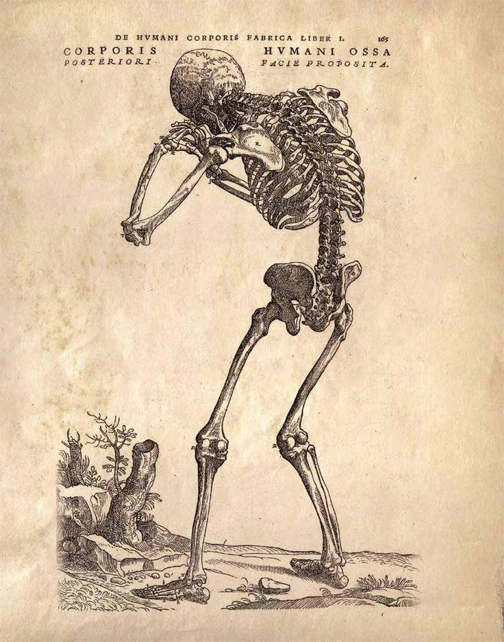 45 best Vintage Medical Charts\/Prints images on Pinterest Draw - medical charts