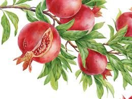 Image result for pomegranate watercolor
