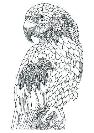 Valentine Coloring Page Ideas Bird Coloring Pages Animal Coloring Pages Cool Coloring Pages