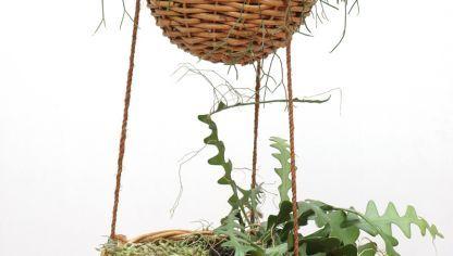 Plantación de cactus de Pascua